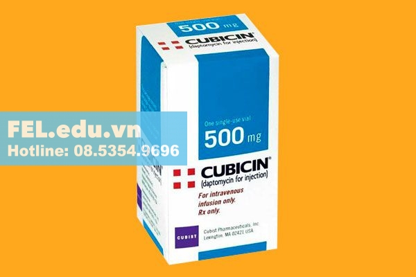 Daptomycin trong biệt dược Cubicin 500mg