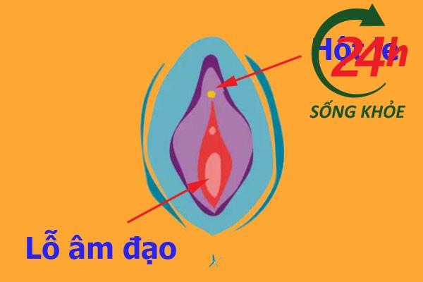 Hột le
