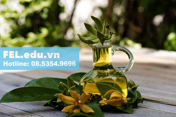 Tinh dầu ngọc lan tây xông phòng