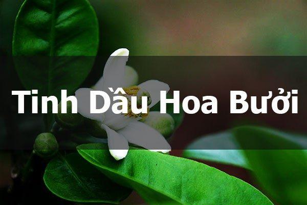 Tinh dầu hoa bưởi được chiết xuất từ hoa của cây bưởi
