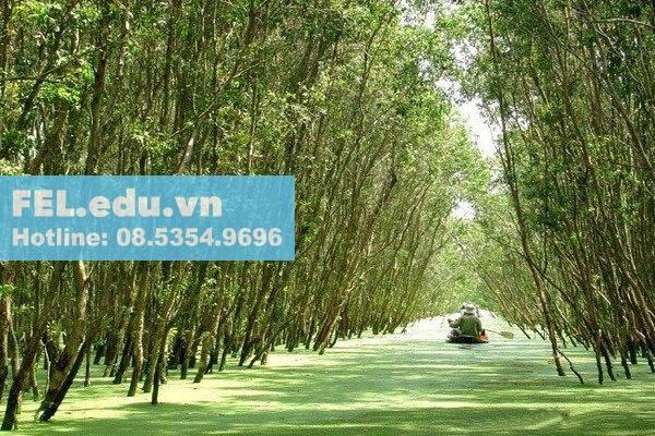 Đặc điểm sinh thái của cây Tràm