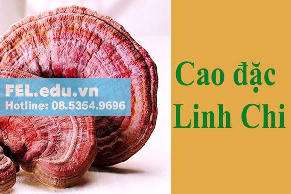 Cao đặc Linh Chi trong Alcofree