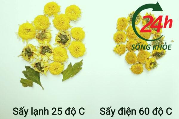 Cảnh báo nhầm lẫn Cúc hoa sấy lạnh và Cúc hoa sấy điện