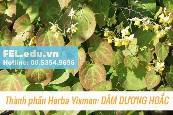 Herba Vixmen