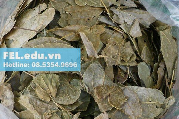 Dâm Dương Hoắc