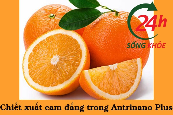 Chiết xuất cam đắng trong Antrinano Plus