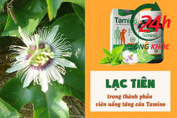 Lạc tiên có trong thành phần của Viên uống tăng cân Tamino