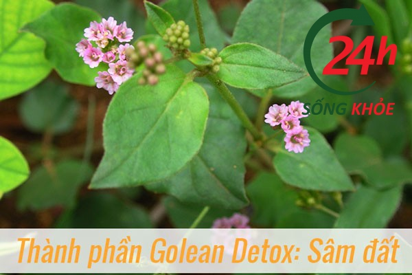 Trà thảo mộc giảm cân Golean Detox