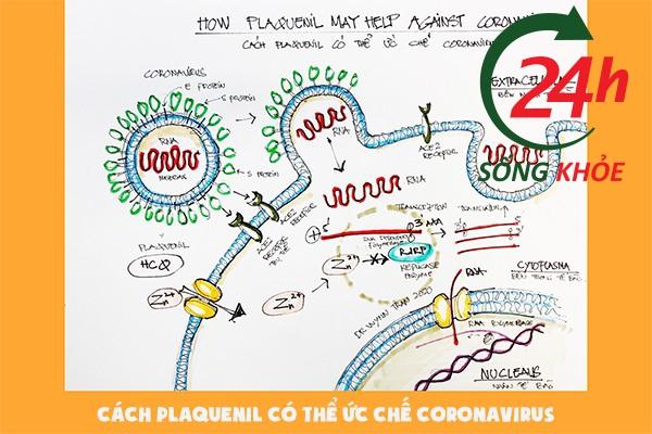 Cơ chế Plaquenil ức chế Corona virus