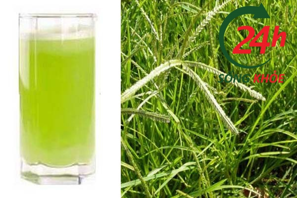 Uống nước thuốc từ cỏ mần trầu