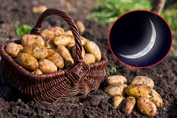 Lưu ý thời gian hợp lý khi sử dụng mặt nạ khoai tây