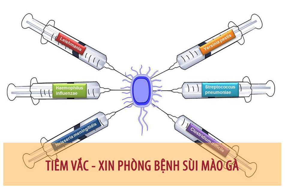 Tiêm vắc - xin phòng bệnh sùi mào gà