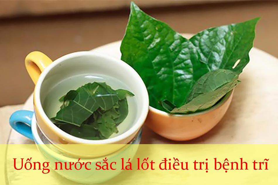 Uống nước sắc lá lốt điều trị bệnh trĩ